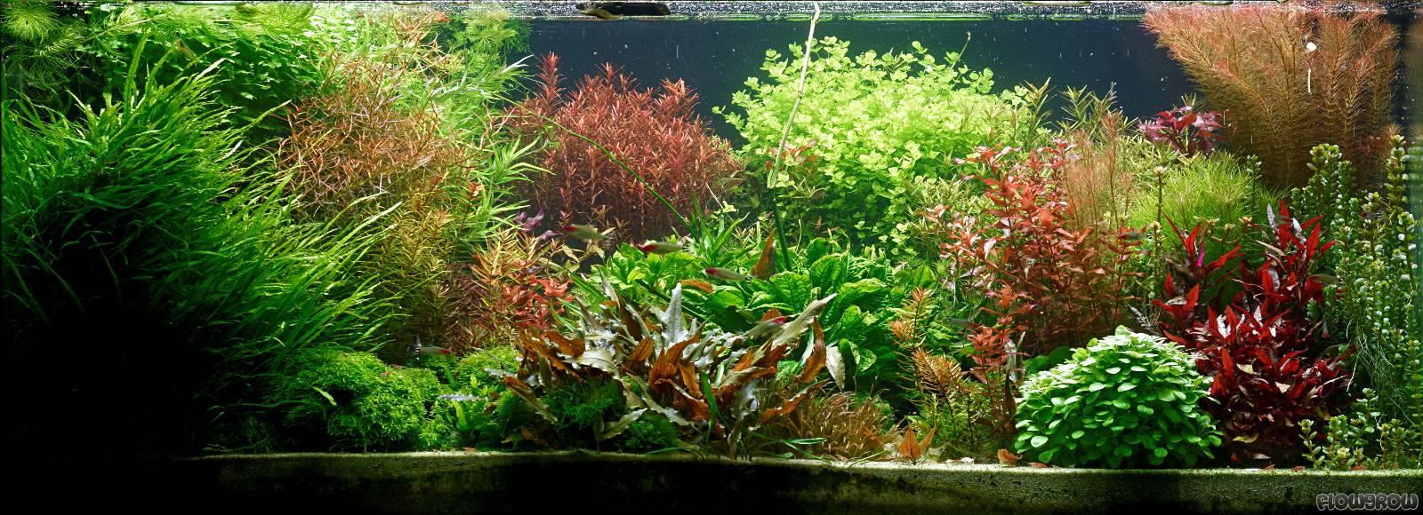 aquarienbeleuchtung steuerbar gestalten led forum. Black Bedroom Furniture Sets. Home Design Ideas
