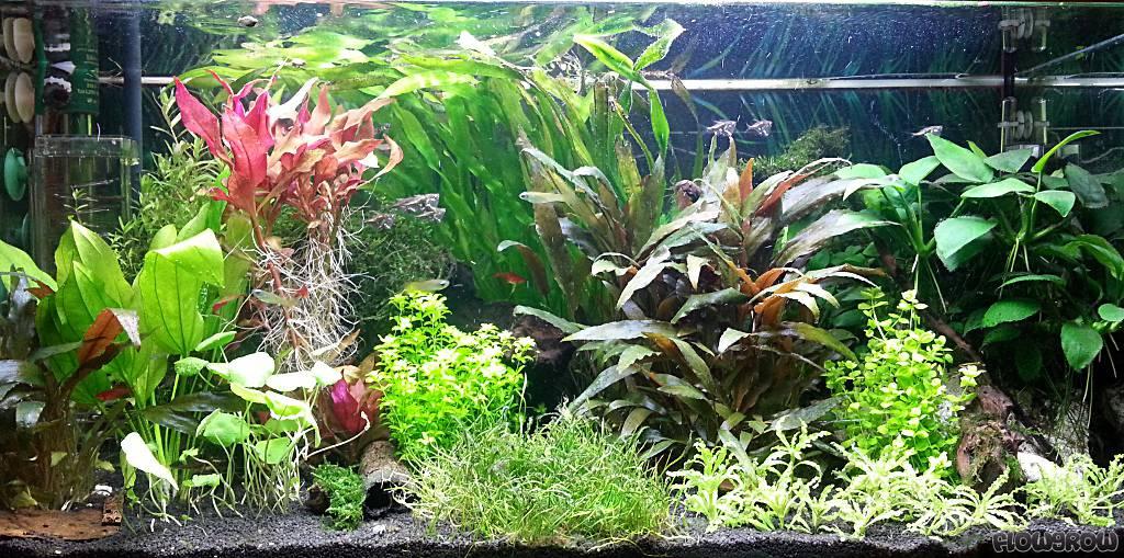 mein b roaquarium flowgrow aquascape aquarien datenbank. Black Bedroom Furniture Sets. Home Design Ideas