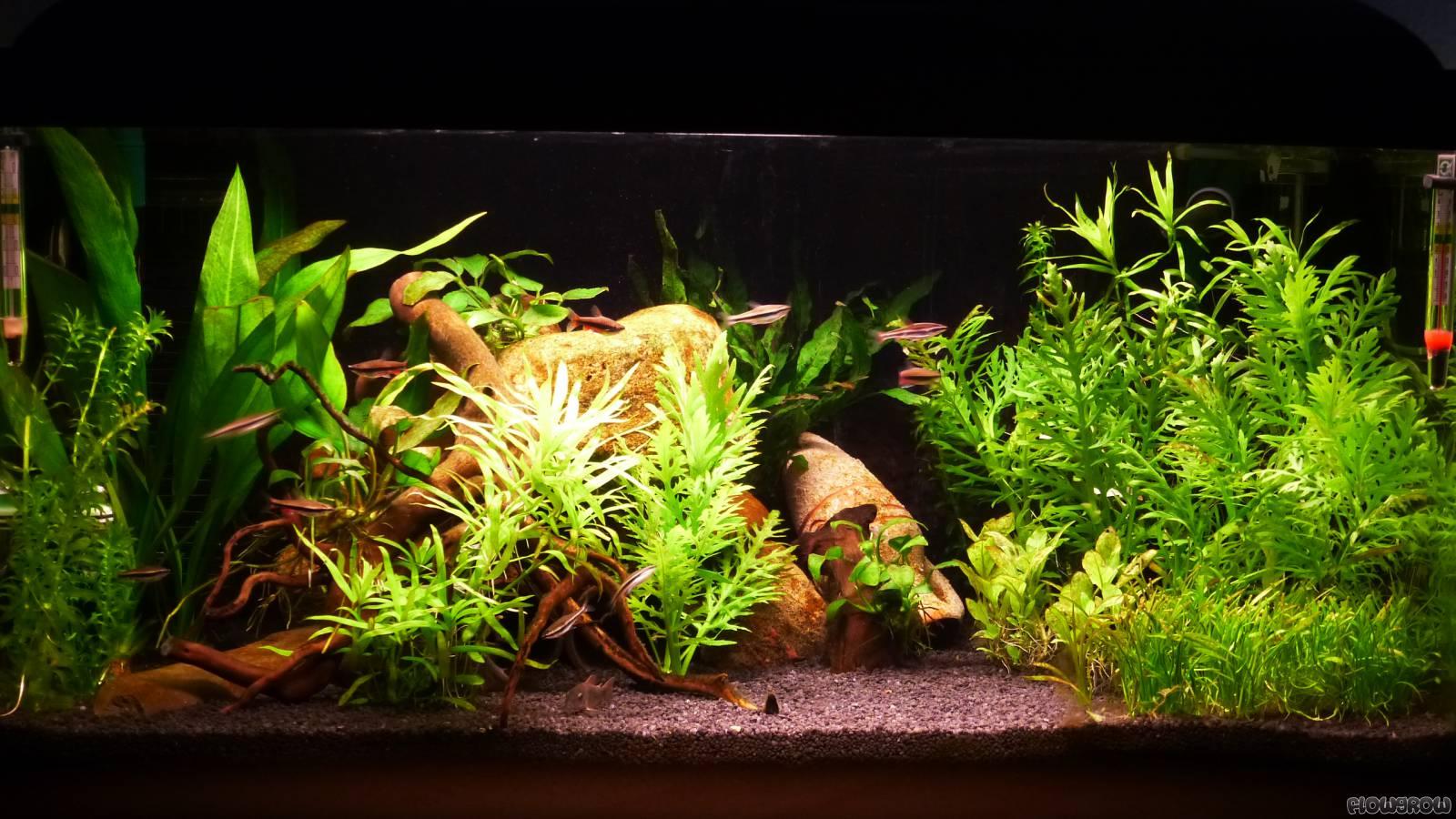 mein kleines aquarium flowgrow aquascape aquarien datenbank. Black Bedroom Furniture Sets. Home Design Ideas