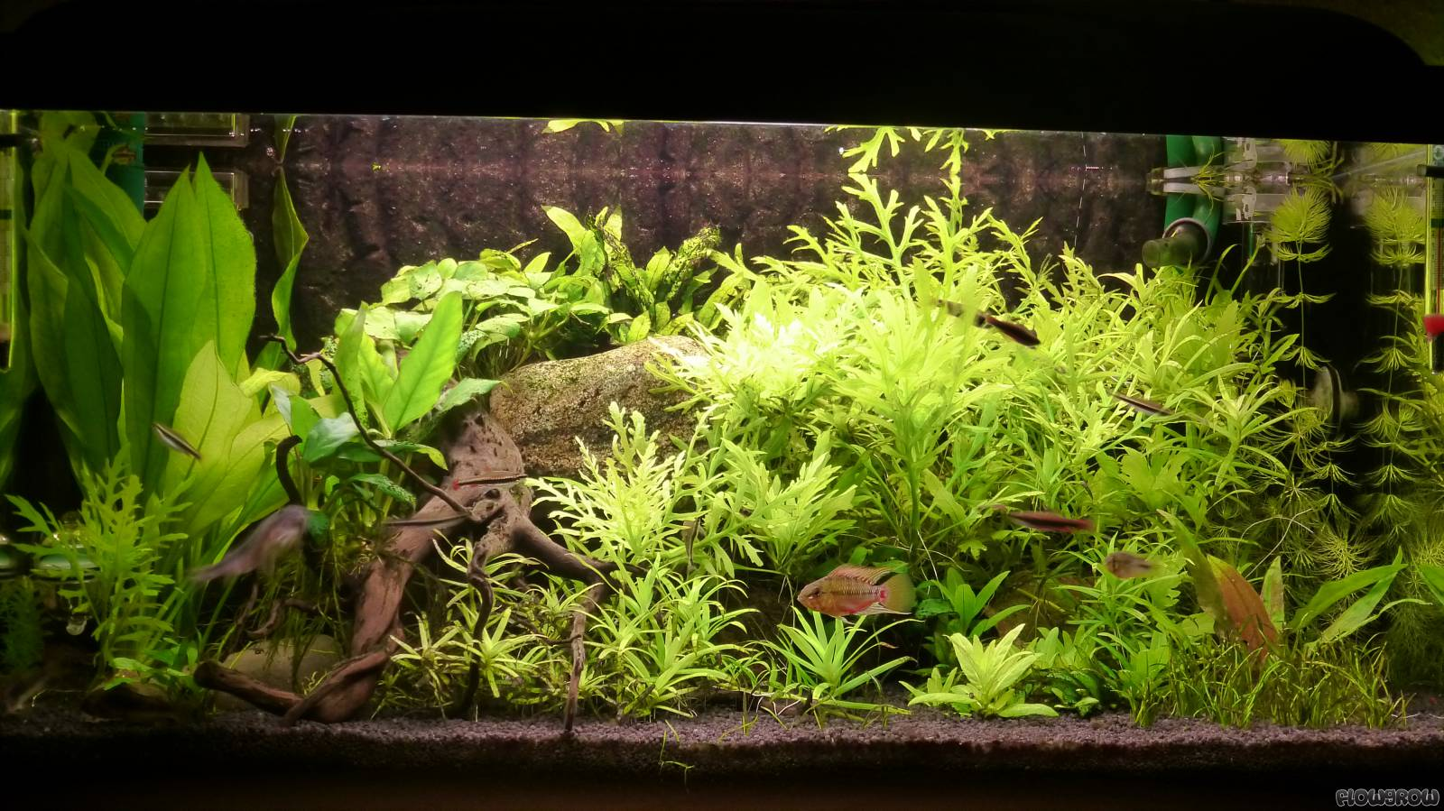 Mein kleines Aquarium - Flowgrow Aquascape/Aquarien-Datenbank