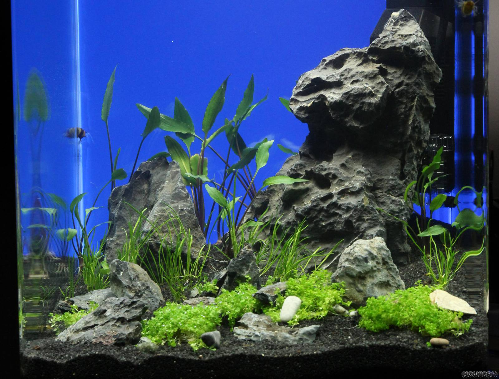 nano cube 30l flowgrow aquascape aquarien datenbank. Black Bedroom Furniture Sets. Home Design Ideas