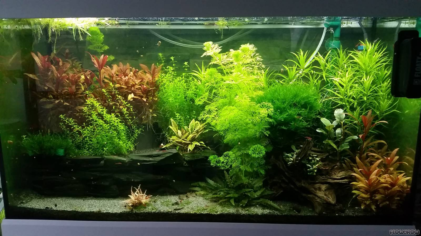 niiika s 112l becken flowgrow aquascape aquarien datenbank. Black Bedroom Furniture Sets. Home Design Ideas