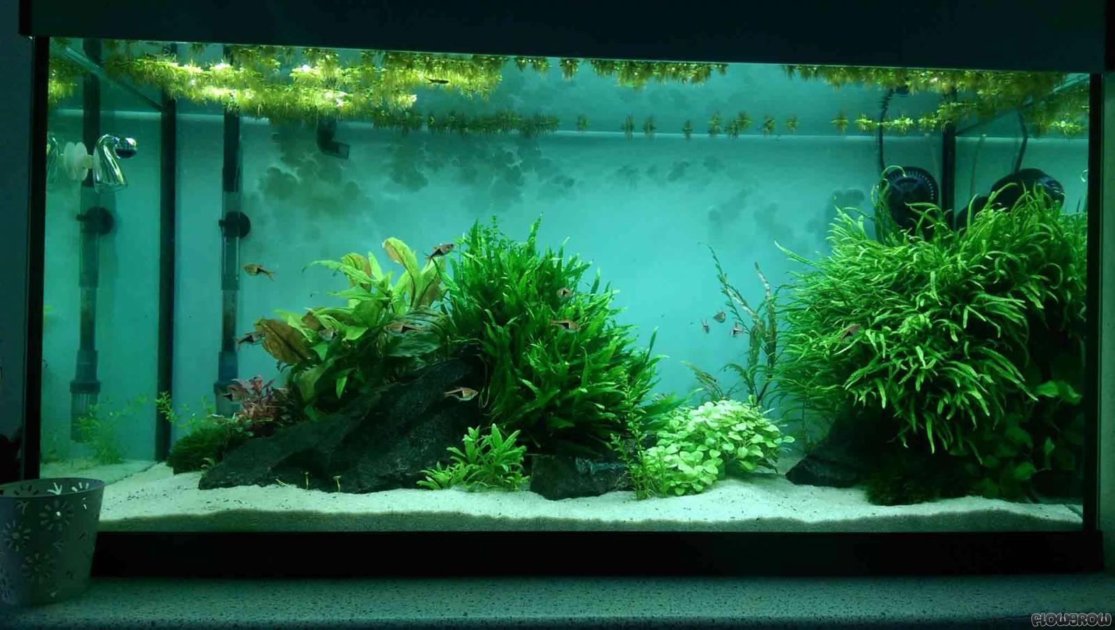 aquarium liter berechnen zuhause image idee. Black Bedroom Furniture Sets. Home Design Ideas