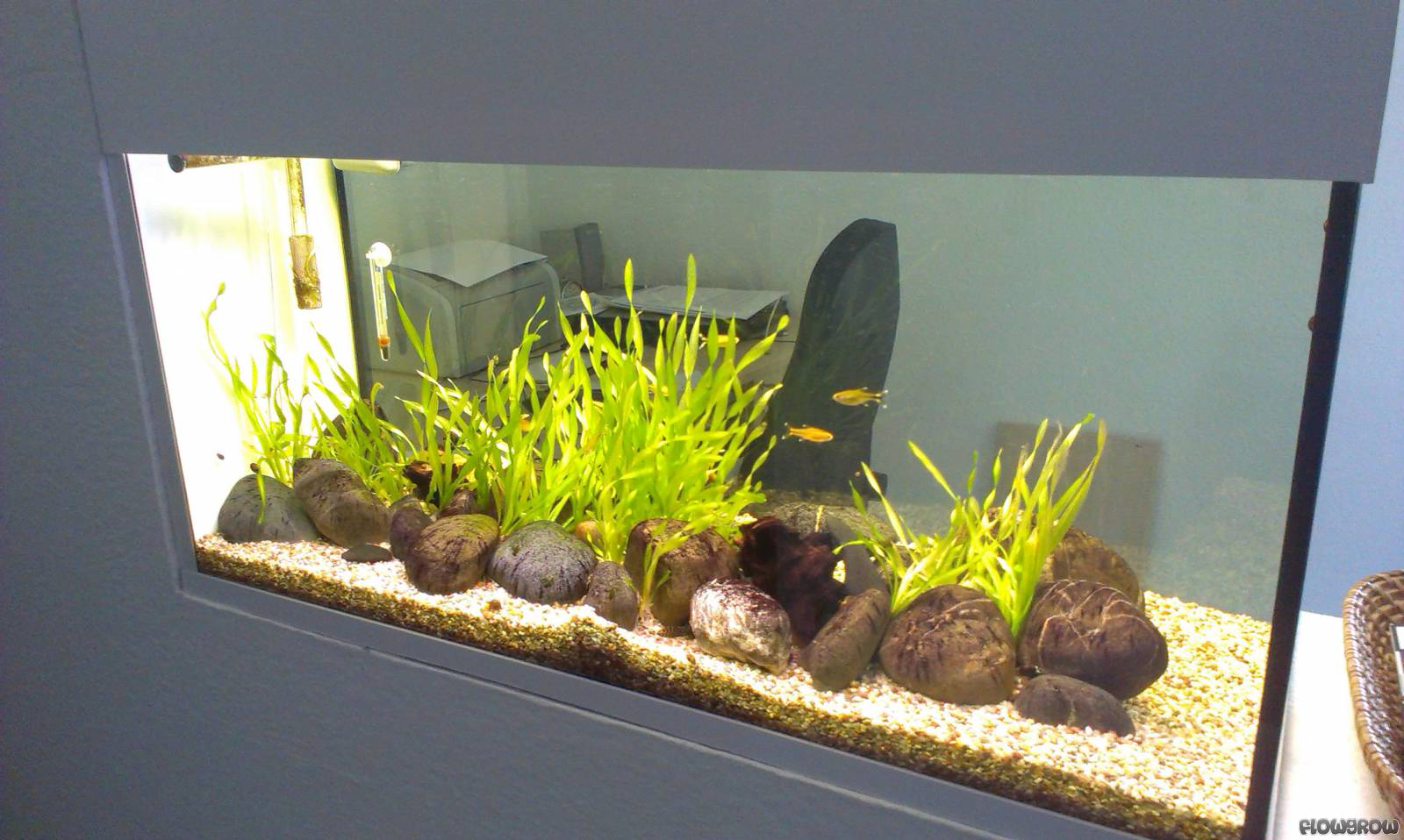 raumteiler flowgrow aquascape aquarien datenbank. Black Bedroom Furniture Sets. Home Design Ideas