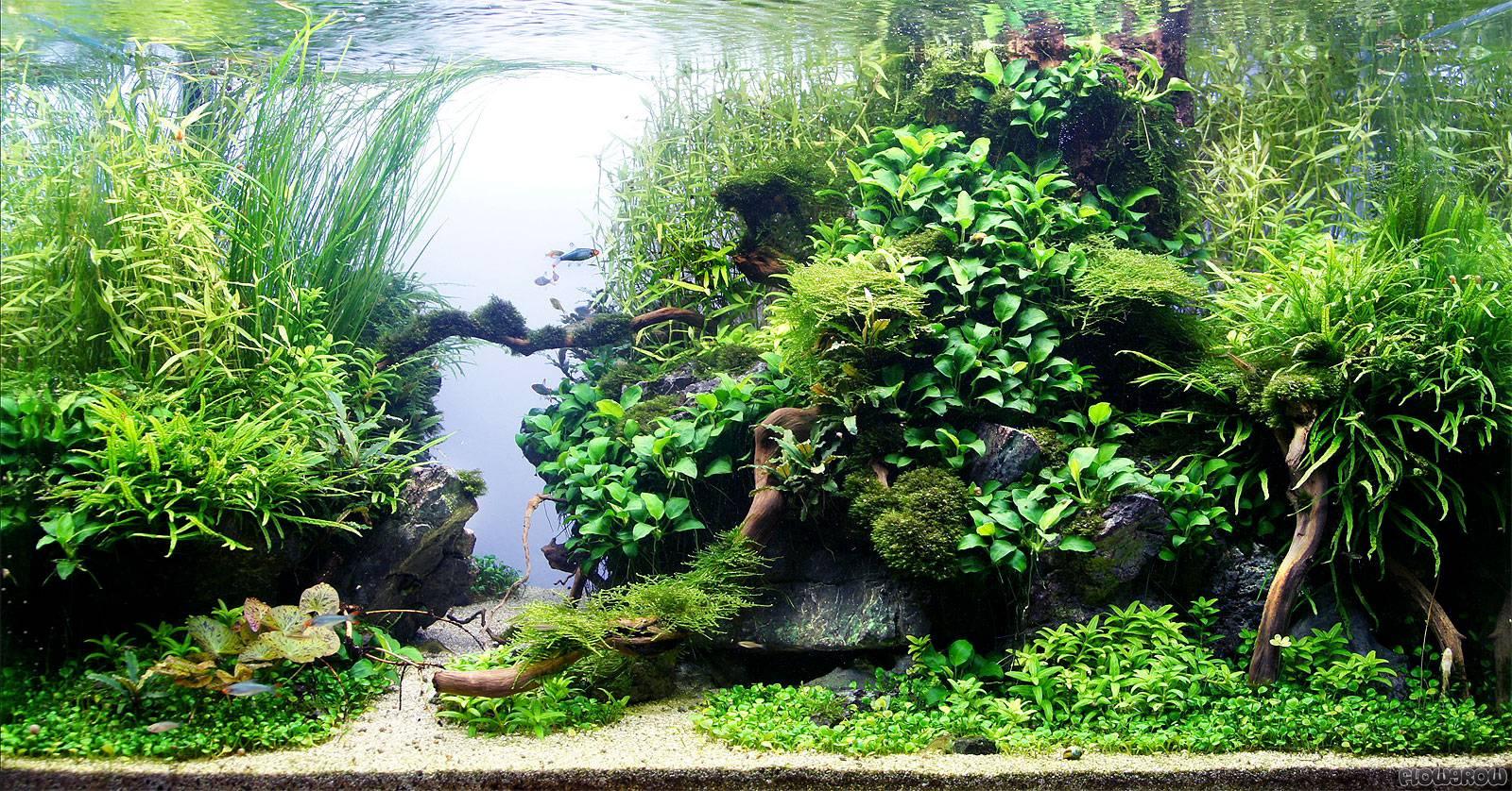 roca de plata flowgrow aquascape aquarien datenbank. Black Bedroom Furniture Sets. Home Design Ideas