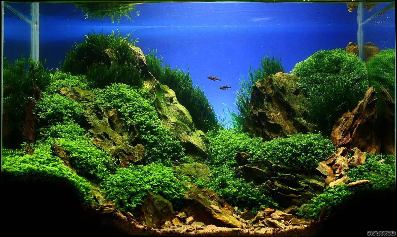 Rocks Flowgrow Aquascape Aquarien Datenbank