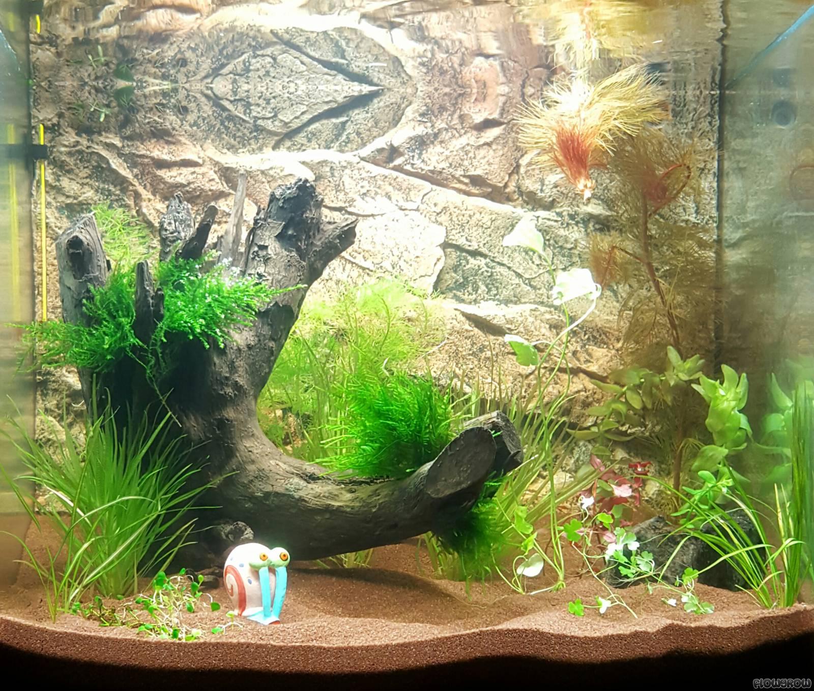 schildy focus 80 flowgrow aquascape aquarien datenbank. Black Bedroom Furniture Sets. Home Design Ideas