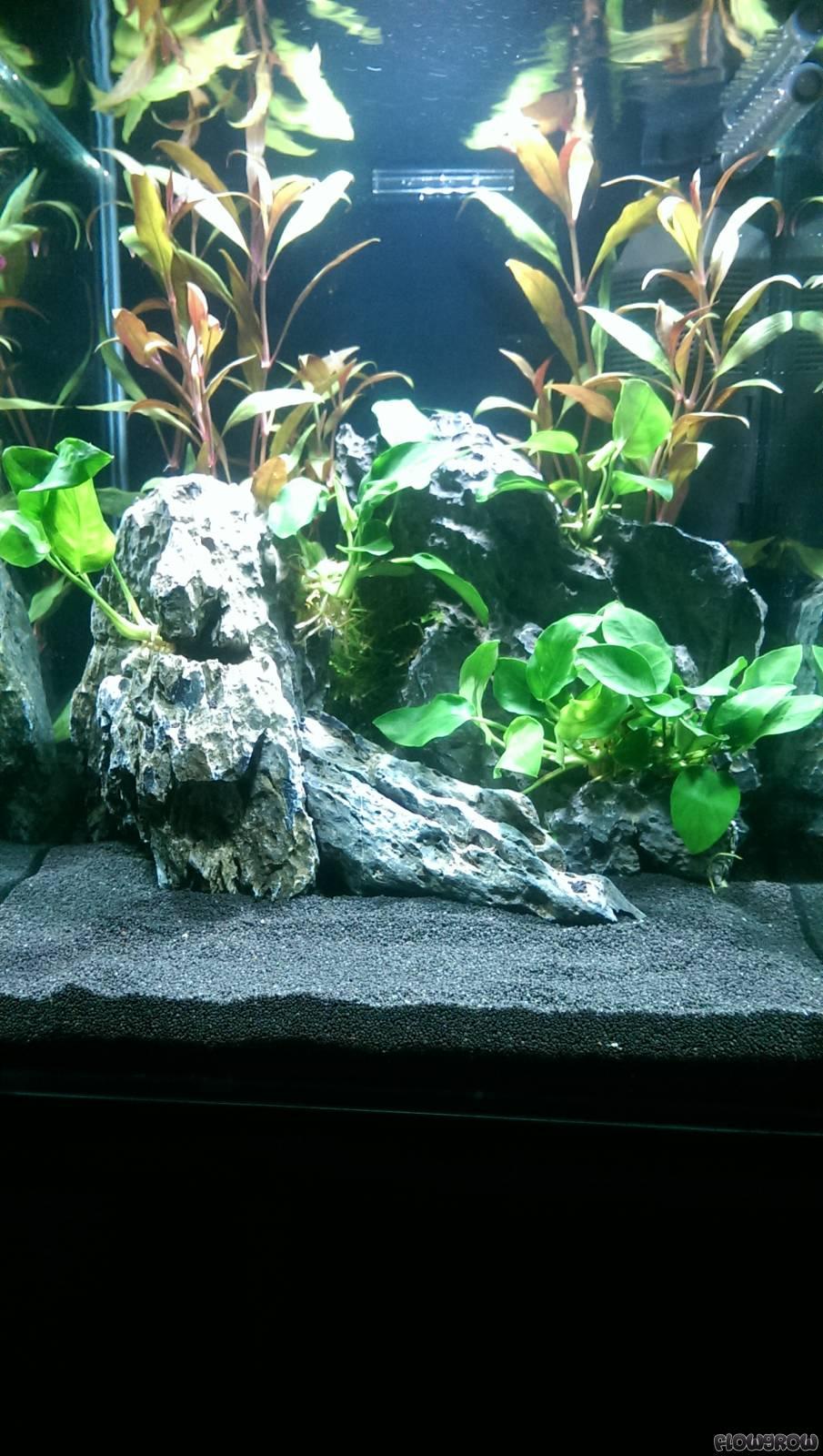 stoni flowgrow aquascape aquarien datenbank. Black Bedroom Furniture Sets. Home Design Ideas