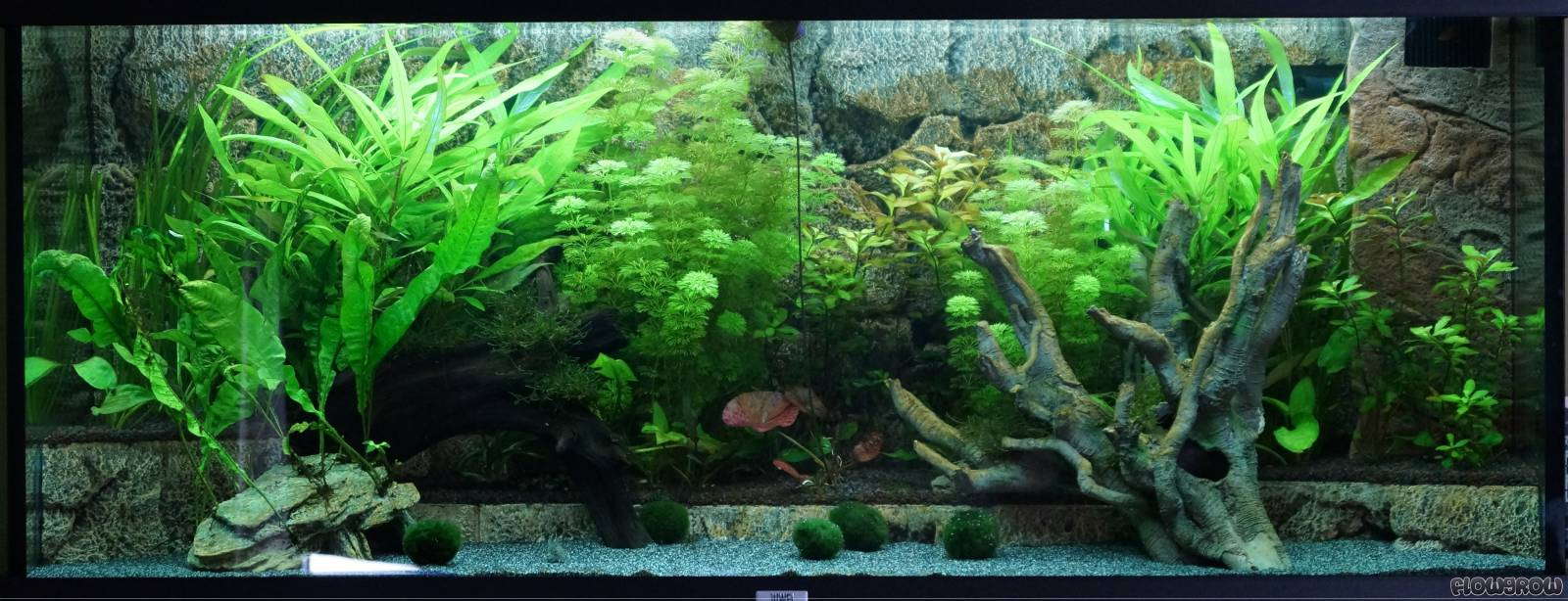 s damerika flowgrow aquascape aquarien datenbank. Black Bedroom Furniture Sets. Home Design Ideas