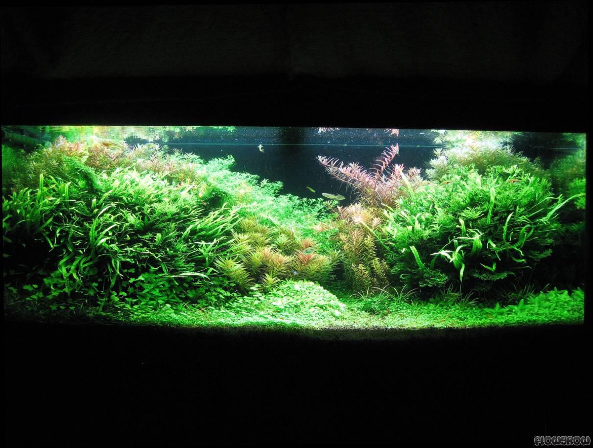 sunny day flowgrow aquascape aquarien datenbank. Black Bedroom Furniture Sets. Home Design Ideas