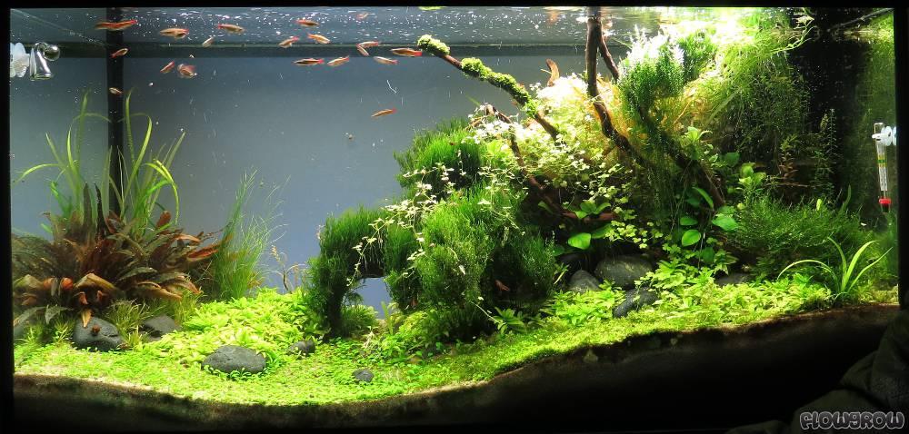 the place to be flowgrow aquascape aquarien datenbank. Black Bedroom Furniture Sets. Home Design Ideas