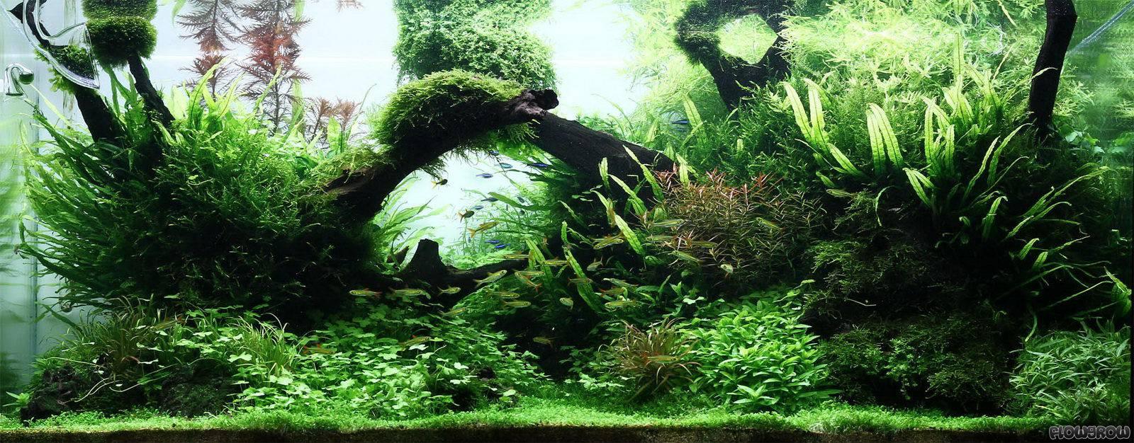 treibholz pflanzen flowgrow aquascape aquarien datenbank. Black Bedroom Furniture Sets. Home Design Ideas