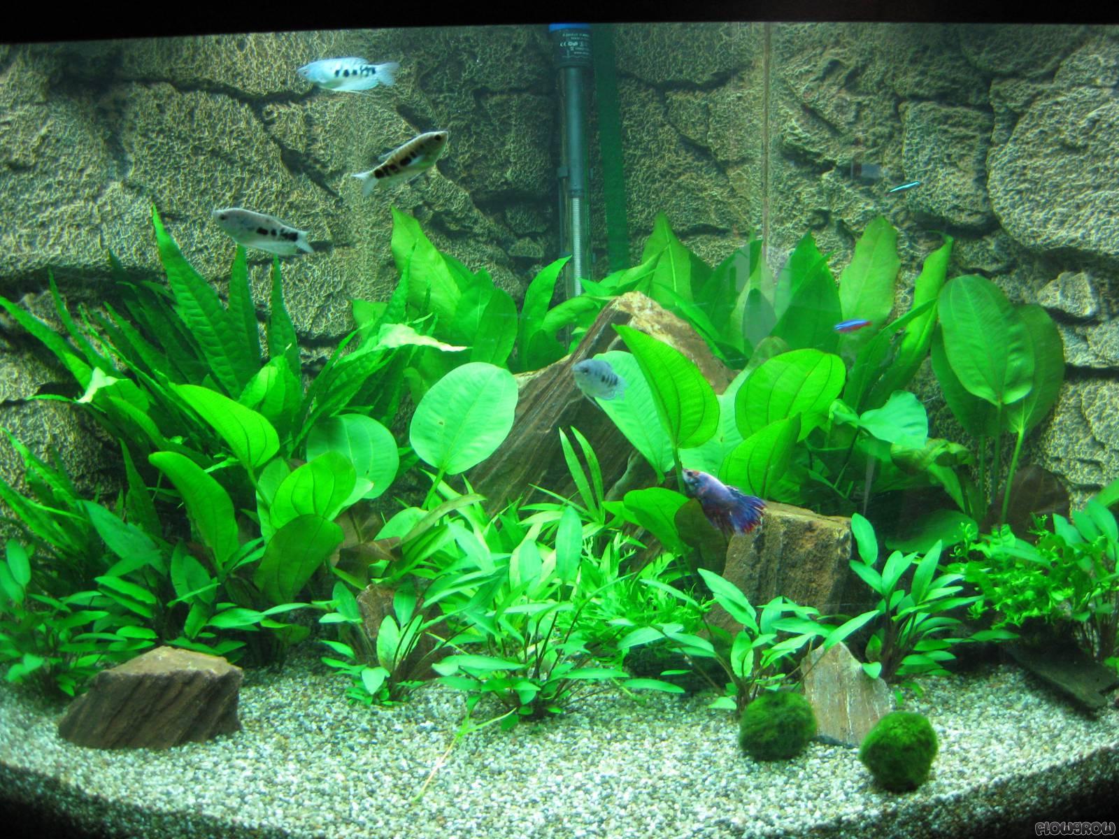 trigon 350 flowgrow aquascape aquarien datenbank. Black Bedroom Furniture Sets. Home Design Ideas