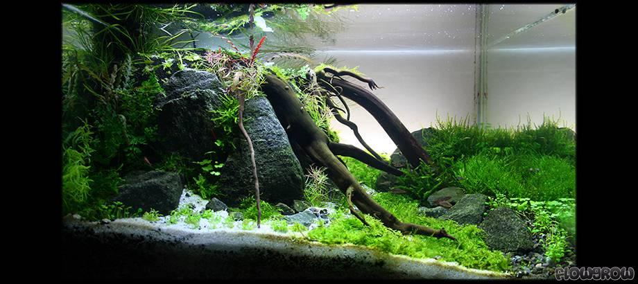 under a tree flowgrow aquascape aquarien datenbank. Black Bedroom Furniture Sets. Home Design Ideas