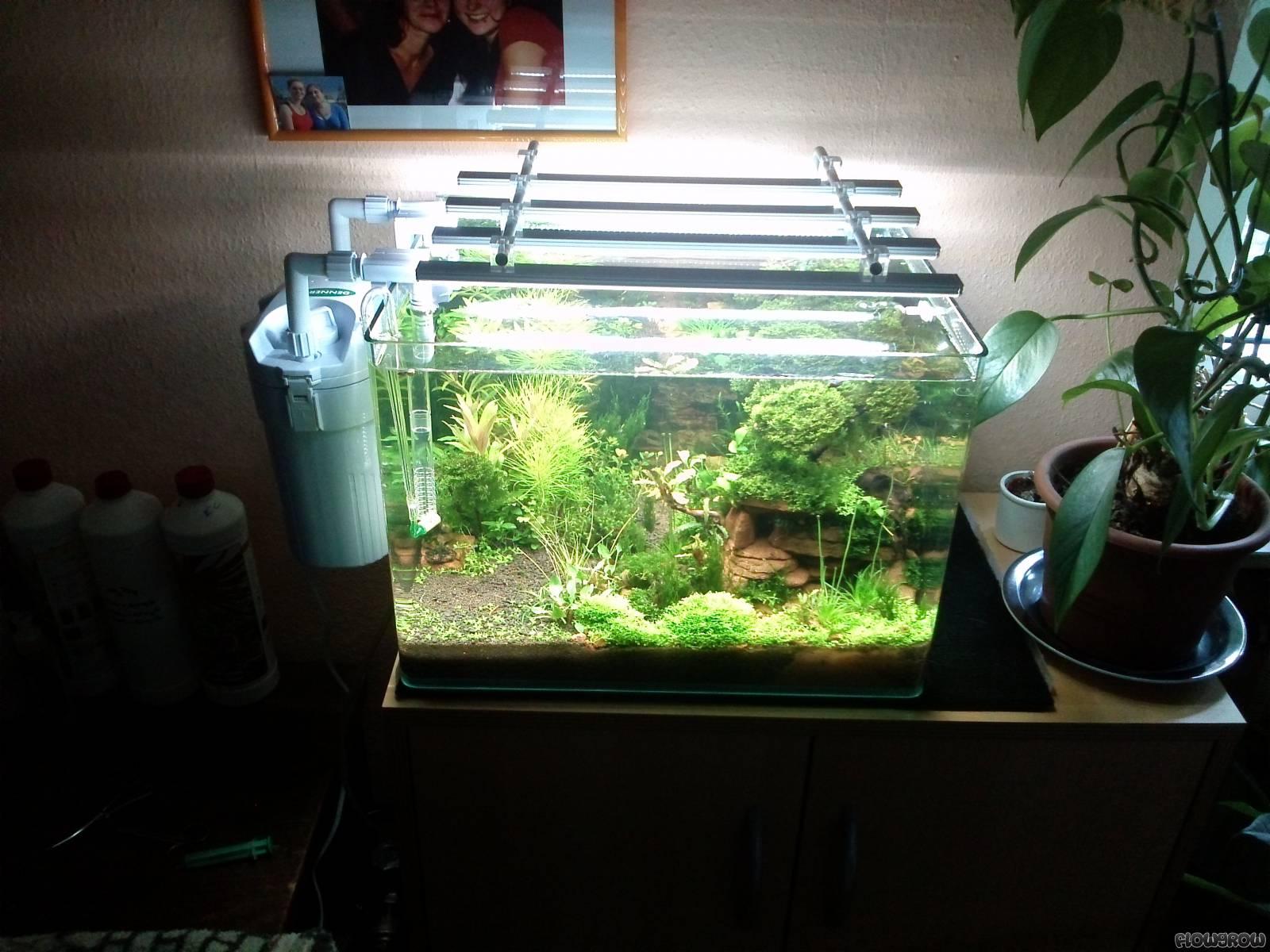 wasgau tal flowgrow aquascape aquarien datenbank. Black Bedroom Furniture Sets. Home Design Ideas