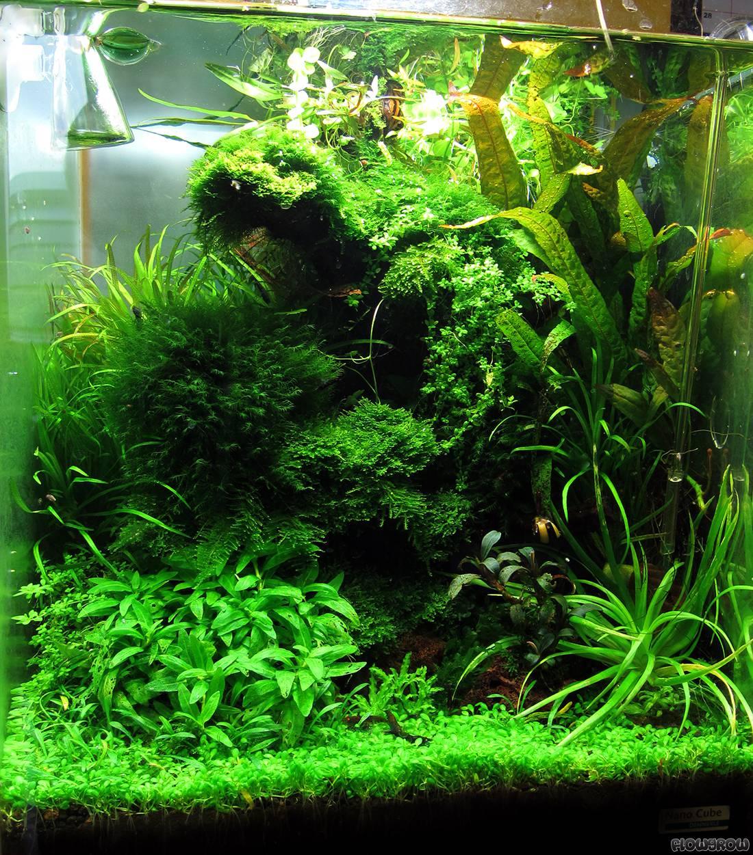 Flowgrow - Aquascaping - Aquarium - Wasserpflanzen