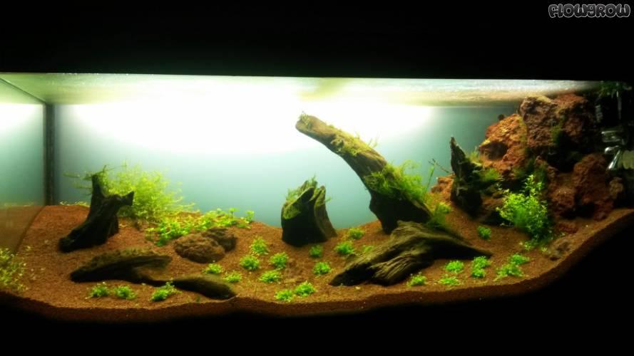 120x40x50 flowgrow aquascape aquarien datenbank for Aquarium 120x40x50
