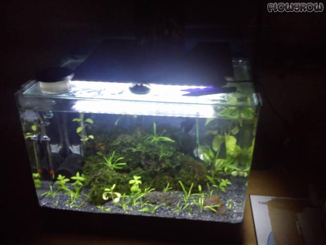 characidano flowgrow aquascape aquarien datenbank. Black Bedroom Furniture Sets. Home Design Ideas