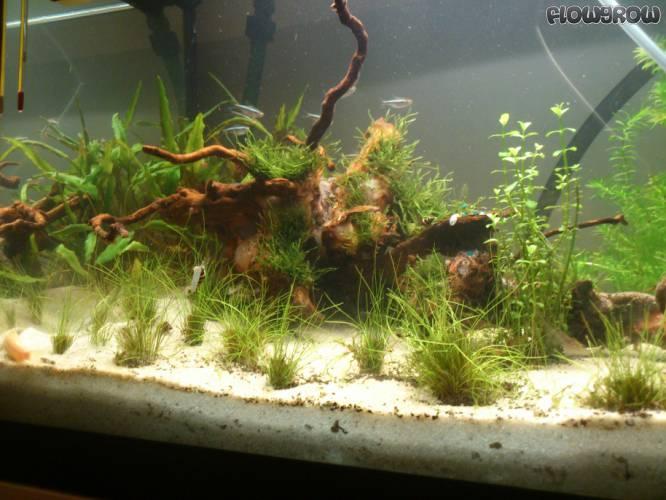 das ufer flowgrow aquascape aquarien datenbank. Black Bedroom Furniture Sets. Home Design Ideas