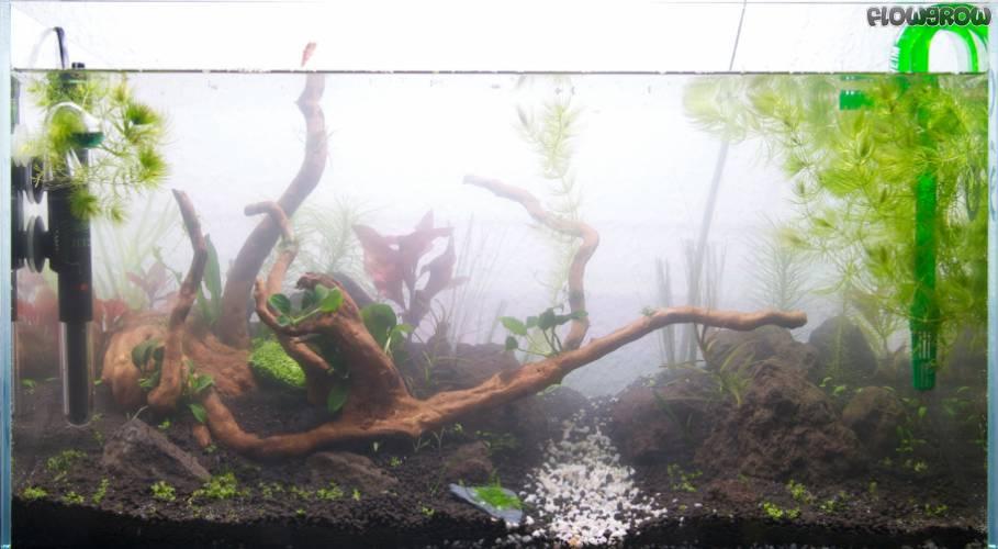green ii flowgrow aquascape aquarien datenbank. Black Bedroom Furniture Sets. Home Design Ideas