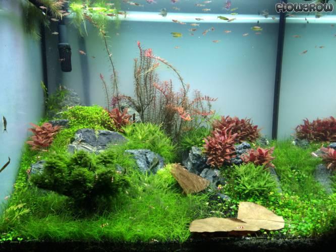Gr nes f rs wohnzimmer flowgrow aquascape aquarien datenbank - Grunes wohnzimmer ...