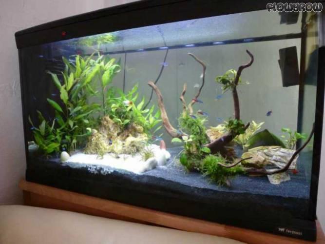 mein anfang flowgrow aquascape aquarien datenbank. Black Bedroom Furniture Sets. Home Design Ideas