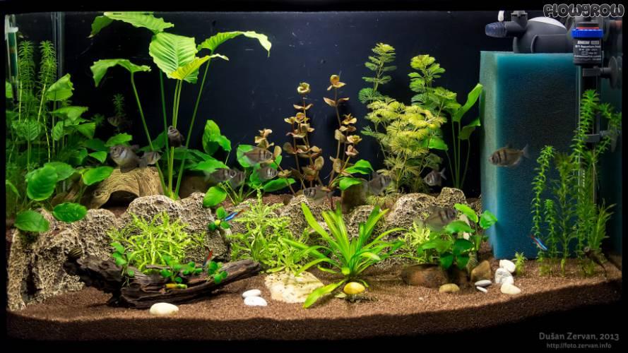 terrace aquarium flowgrow aquascape aquarien datenbank. Black Bedroom Furniture Sets. Home Design Ideas