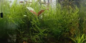 10L Wirbellosenbecken - Flowgrow Aquascape/Aquarien-Datenbank