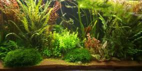 112 Liter Nr 1 - Flowgrow Aquascape/Aquarien-Datenbank