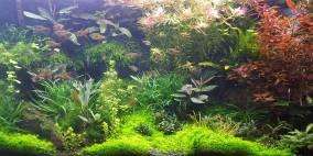 112 Liter Nr.2 - Flowgrow Aquascape/Aquarien-Datenbank