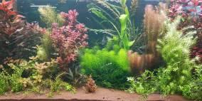 112 Liter Nr.3 - Flowgrow Aquascape/Aquarien-Datenbank