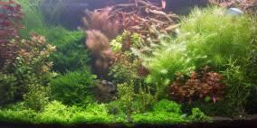 112 Liter Nr.4 - Flowgrow Aquascape/Aquarien-Datenbank