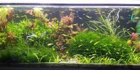 122 Liter Becken Nr 1 - Flowgrow Aquascape/Aquarien-Datenbank