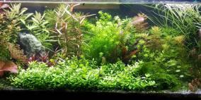 122 Liter Becken Nr.2 - Flowgrow Aquascape/Aquarien-Datenbank