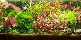122 Liter Becken Nr.3 - Flowgrow Aquascape/Aquarien-Datenbank