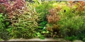 160 Liter Nr.1 - Flowgrow Aquascape/Aquarien-Datenbank