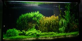 2015 - Flowgrow Aquascape/Aquarien-Datenbank