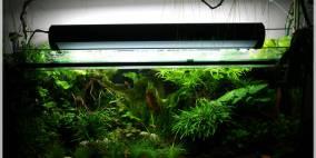 240 Liter - Flowgrow Aquascape/Aquarien-Datenbank