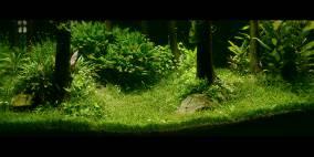 300L - Silvosus - Flowgrow Aquascape/Aquarien-Datenbank