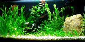 60 Liter - Flowgrow Aquascape/Aquarien-Datenbank