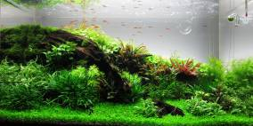 63l GlasGarten - Flowgrow Aquascape/Aquarien-Datenbank