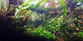 A big mess... - Flowgrow Aquascape/Aquarien-Datenbank