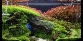 A Brief Crack of Light - Flowgrow Aquascape/Aquarien-Datenbank