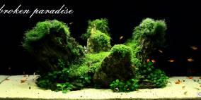 A broken paradise - Flowgrow Aquascape/Aquarien-Datenbank