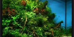 A Certain Shade of Green - Flowgrow Aquascape/Aquarien-Datenbank