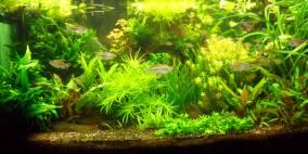 Ab ins Wasser - Flowgrow Aquascape/Aquarien-Datenbank