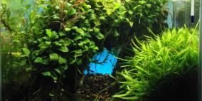 ADA 30er Cube - Flowgrow Aquascape/Aquarien-Datenbank