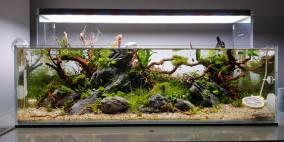 ADA 60-F 1219116 - Flowgrow Aquascape/Aquarien-Datenbank