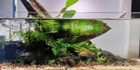 ADA 60F - Driftwood - Flowgrow Aquascape/Aquarien-Datenbank