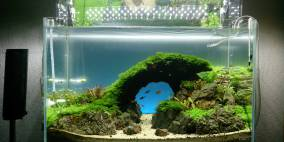 ADA Cube Garden 60P - 'Tannhauser Gate' - Flowgrow Aquascape/Aquarien-Datenbank